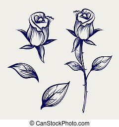 Sketch rose flower, bud and leaves - Vintage sketch rose...