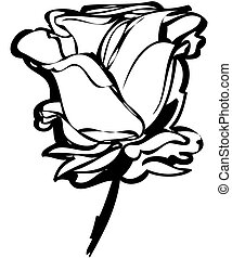 sketch rosebud on a white background - black and white...