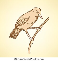 Sketch rufous hornero bird in vintage style, vector