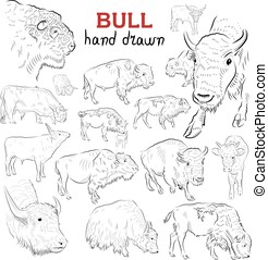 Set of different bulls.