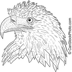 Sketch silhouette sketch eagle face on white background illustration