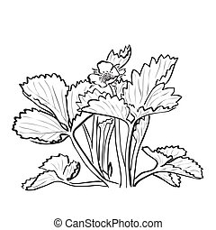 Sketch strawberry bush with flower