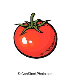 Sketch style drawing of shiny ripe red tomato