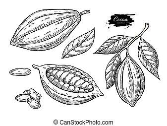 sketch., superfood, cacao, sano, set.organic, vector, alimento, dibujo