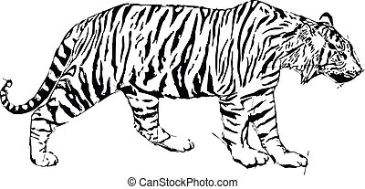 Sketch vector illustration of tyger