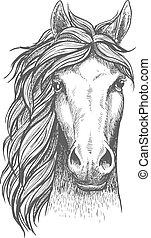 sketched, árabe, purebred, cavalo, com, alerta, orelhas