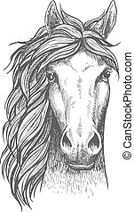 Sketched arabian purebred horse with alert ears - Beautiful...