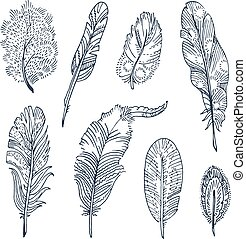 Sketched Feathers collection