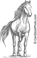 Sketched vector portrait of horse. White mare horse pacing...