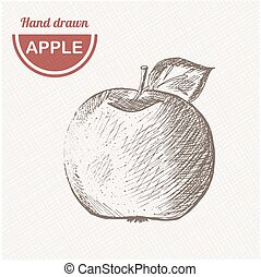 Sketches apple composition. Hand drawn apple. Vintage sketch style illustration.
