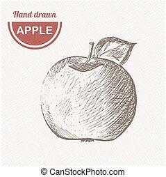Sketches apple composition. Hand drawn apple. Vintage sketch style illustration.