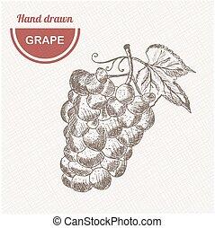 Sketches grape composition. Hand drawn apple. Vintage sketch style illustration.