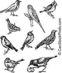 Sketches of  different wild birds