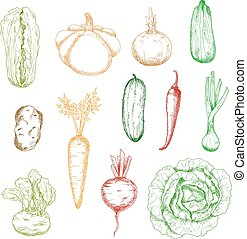 Sketches of isolated farm vegetables - Sketches of wholesome...