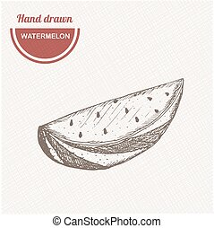 Sketches watermelon composition. Hand drawn watermelon. Vintage sketch style illustration.