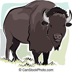 sketchy, bison