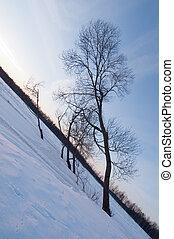 Skewed trees on riverside