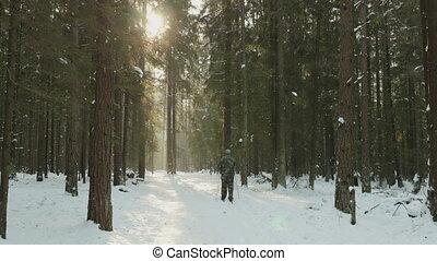 ski, hiver, homme, forêt