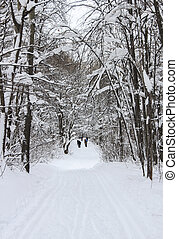 Ski in the winter forest - Ski walking paths in the winter...
