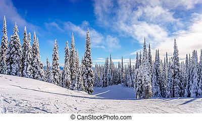 Ski piste on Sundance Mountain