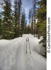 Ski poles in the snow