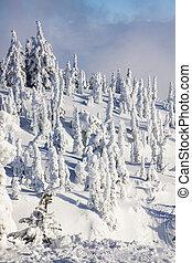 Ski Resort Terrain on Sunny Day