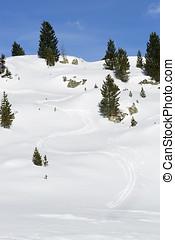 Ski run between green firs in the snowy Austrian Alps