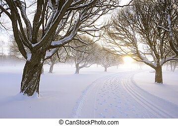 ski run in a winter park