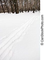 ski runs on the edge of birch forest