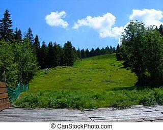 Ski slope in summer