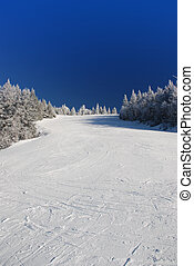 Ski slope on tree covered mountain side