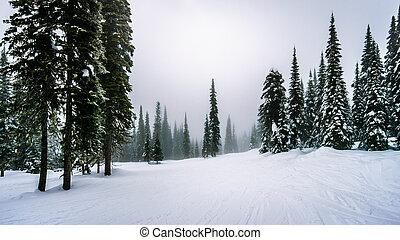 Ski Slopes through the Forest