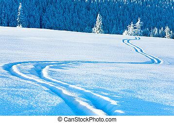 ski, spoor, op, sneeuw, oppervlakte, en, spar, bos, behind.