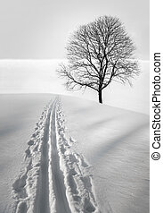 Ski track and tree - ski track in field with single bare ...