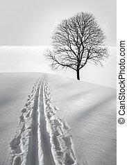 ski track in field with single bare tree