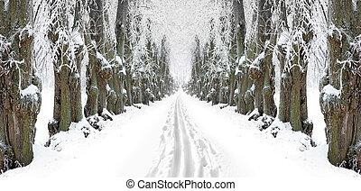 Ski track in avenue