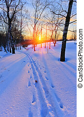 Ski track in countryside at sunset