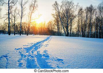 Ski track in countryside