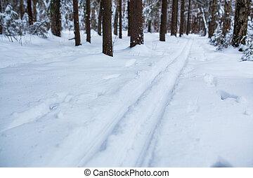 Ski track in wild winter forest.