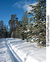 Ski track in winter forest
