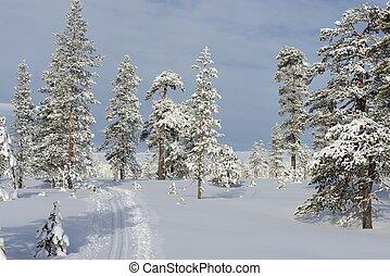 Ski tracks in Sweden
