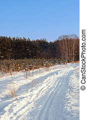 Ski tracks in the winter forest