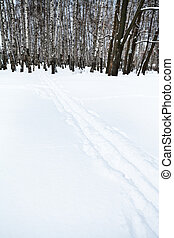ski tracks on the edge of birch forest