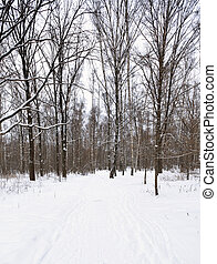 ski tracks on the edge of forest