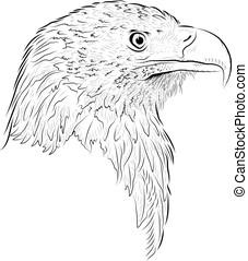 skica, eagle.