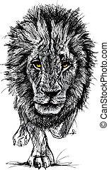 skica, o, jeden, big, mužský, afričan lev