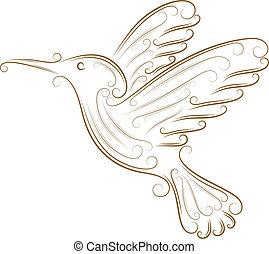 skica, o, kolibřík
