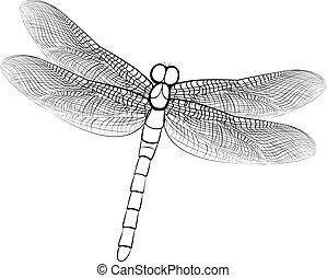 skica, osamocený, neposkvrněný, ilustrace, šídlo