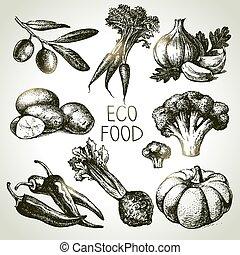 skicc, eco, set., ábra, kéz, foods.vector, növényi, húzott