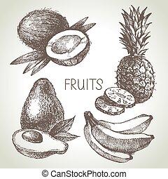 skicc, eco, set., foods., ábra, kéz, gyümölcs, vektor, húzott